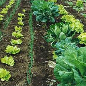 Biocarbón utilizado como fertilizante ecológico