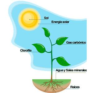 Sin la fotosíntesis se habría interrupido la evolución