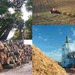 biomasa, fuente de energía renovable ecológica