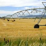 El Pivot reduce el consumo de agua y la mano de obra