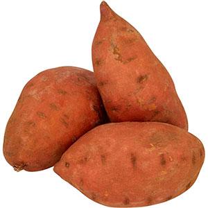 Praderas de semilleros de batatas