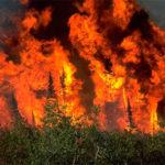 Consecuencias ecológicas de los incendios forestales