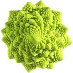 proporción fractal en col Romanescu