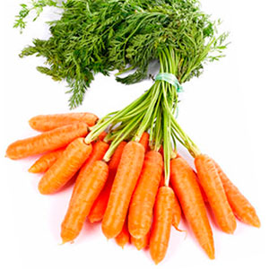 Zanahoria Que Es : La raíz de zanahoria es altamente nutritiva y se la considera como un alimento de primera necesidad, por lo que a menudo se pasa por alto que la zanahoria es un vegetal que también puede usarse.