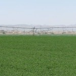 Cultivo de alfalfa mediante riego pivot
