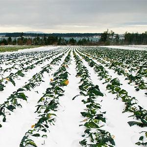 Resistencia al frio de las plantas