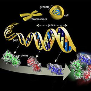 Genoma de la leguminosa de la soja