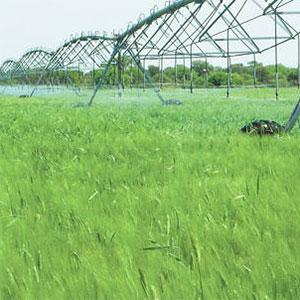 Cultivo de cereal con riego mecanizado