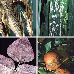Técnicas de prevención de plagas y enfermedades en los cultivos