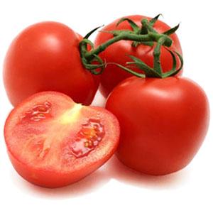 alta rentabilidad en el cultivo de tomate