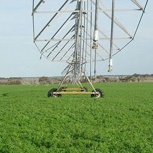 La alfalfa se adapta a la oferta del agua existente