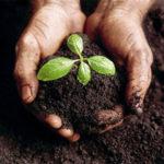 Compost a partir de la mezcla de diversas materias orgánicas