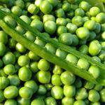 Producción agrícola: tipos y conservas de guisantes