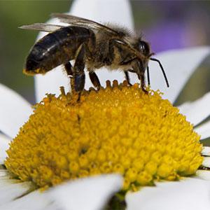 Biodiversidad para la proliferación de polinizadores