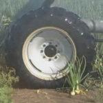 Riego por aspersión mediante Pivotes centrales en cultivo de cebolla