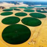 Producción agrícola en el desierto con riego mecanizado