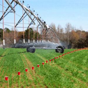 Control del uso hídrico del cultivo con pluviómetros
