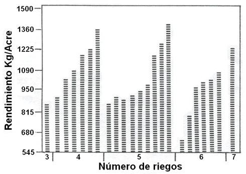 Producción de frijoles asociada al número de riegos