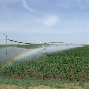 riego de maíz con Pivot