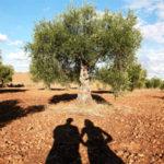 titularidad compartida de las explotaciones agrarias