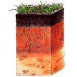 estratos del suelo agrícola