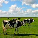 Ubicar las vacas en el campo con GPS