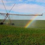 riego pivote con alfalfa