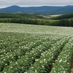 cultivo de patatas con pivote central
