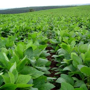 cultivo de soja con riego por pivote