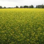 producción de biocombustibles a partir de la soja