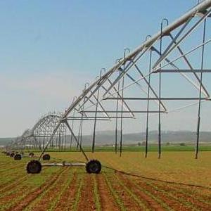 rentabilidad del maíz regado con Pivot