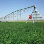 rotación de cultivos mediante cultivos intermedios