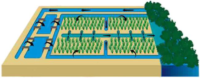 Cultivo de plantas halófitas