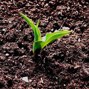 Reponer la materia org nica del suelo mejora los cultivos for Materiales que componen el suelo