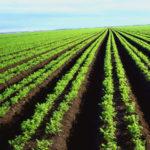 tipos de suelos de cultivo