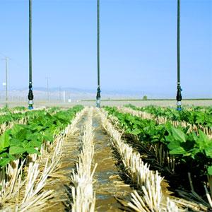 agricultura de conservación para mejorar la competitividad