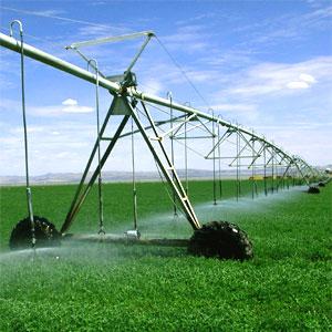 alfalfa para ganado