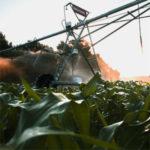 uso de fertilizantes nitrogenados en cultivos de maíz