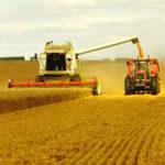 producción de cereales