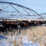 protección antihelada de los cultivos