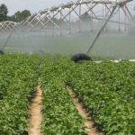 gestión del agua para producir cultivos