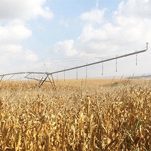 cultivos altos bajo riego pivot