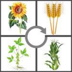 ejemplos de rotación de cultivos