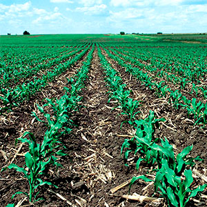 conservación del suelo agrícola