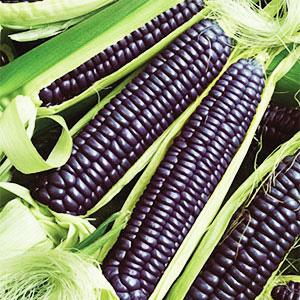 maíz coloreado