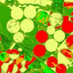seguimiento de cultivos