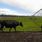 sistema de riego para pasto