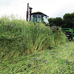 cultivos leguminosas