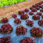 plástico biodegradable para agricultura