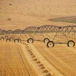doble cultivo con pivot